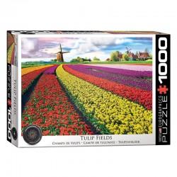 Champ de tulipes, Pays-Bas